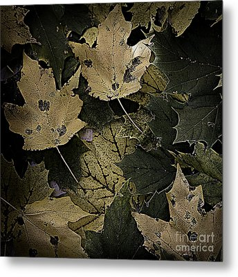 Forest Floor - Leaf 13 Metal Print by Pete Hellmann