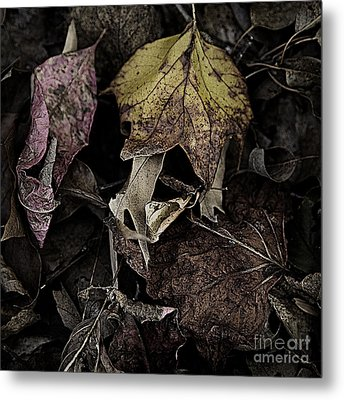 Forest Floor - Leaf 9 Metal Print by Pete Hellmann