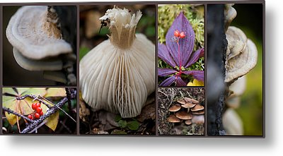 Forest Floor Metal Print by Lisa Knechtel