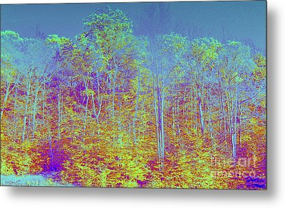 Forest Fog Metal Print by Greg Moores