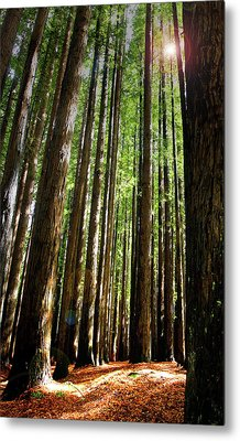 Metal Print featuring the photograph Forest Glade by Marion Cullen