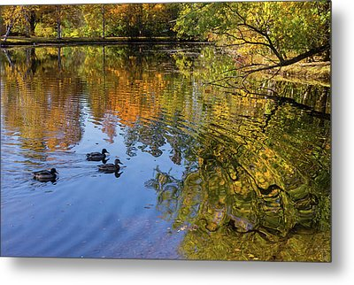 Forest Hill Reflections II Metal Print