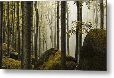 forest II Metal Print by Lukas Holas