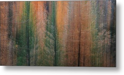 Forest Illusion- Autumn Born Metal Print