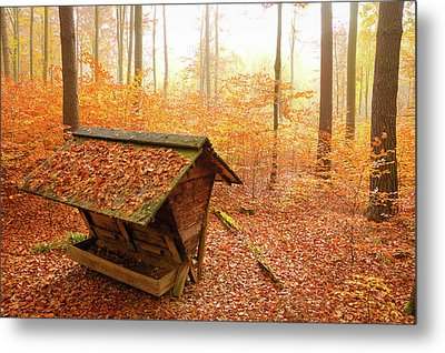 Forest In Autumn With Feed Rack Metal Print by Matthias Hauser