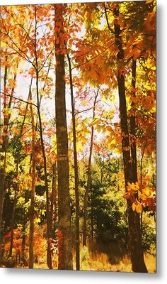 Forest In Fall Metal Print by Utopia Concepts