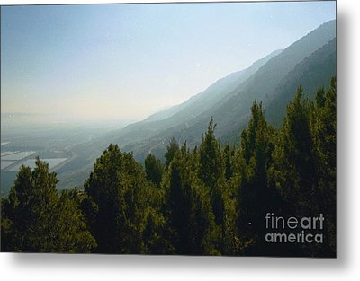 Forest In Israel Metal Print