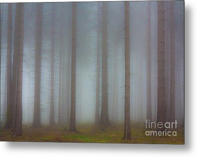 Forest In The Fog Metal Print by Michal Boubin