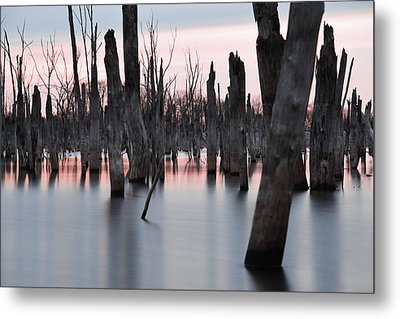 Forest In The Water Metal Print by Jennifer Ancker