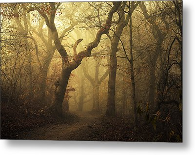 Forest Metal Print by Leif L?ndal