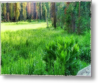 Metal Print featuring the photograph Forest Of Color by Michael Cleere