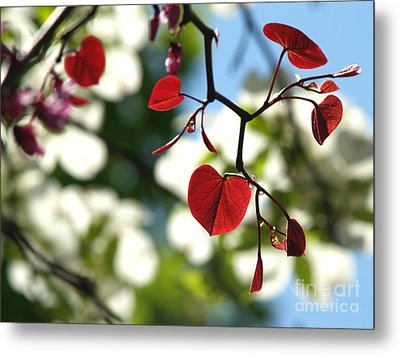 Forest Pansy Redbud Leaves In Spring Metal Print by Anna Lisa Yoder