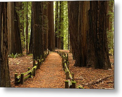 Forest Path Metal Print by Eric Foltz
