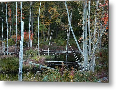 Forest Pond Metal Print by Joseph G Holland