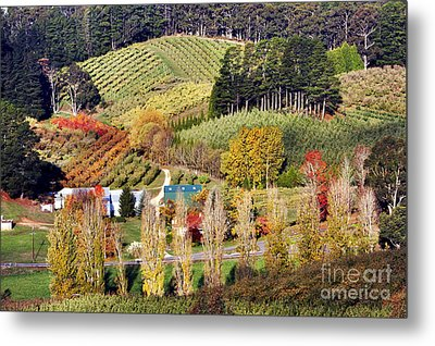 Metal Print featuring the photograph Forest Range, Adelaide Hills by Bill  Robinson
