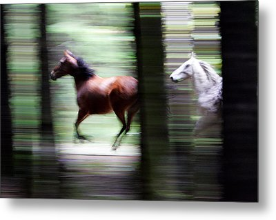 Forest Run Metal Print by Randall Ingalls