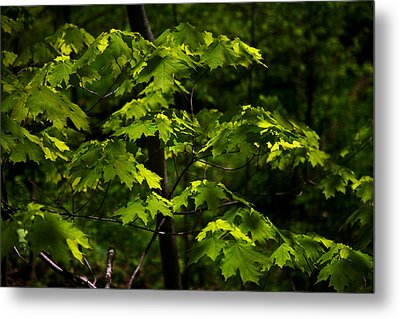 Forest Shades Metal Print