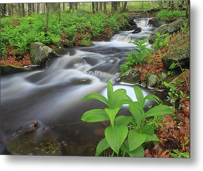 Forest Stream And False Hellabore In Spring Metal Print by John Burk