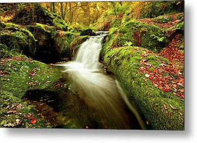 Metal Print featuring the photograph Forest Stream by Jorge Maia