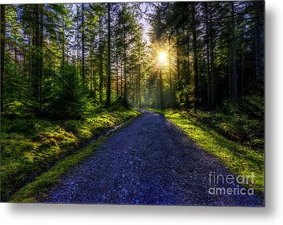 Metal Print featuring the photograph Forest Sunlight by Ian Mitchell