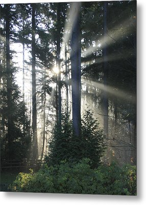 Forest Sunrise Metal Print by Crista Forest