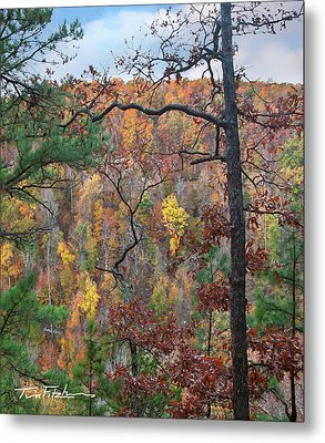 Forest Metal Print by Tim Fitzharris