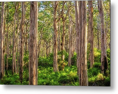 Forest Twilight, Boranup Forest Metal Print