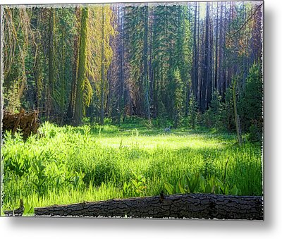 Metal Print featuring the photograph Foresta by Michael Cleere