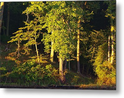Forests Edge Metal Print