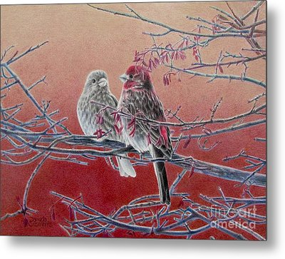 Forever Finch Metal Print by Pamela Clements