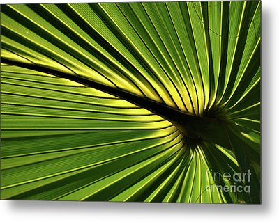 Forever Fronds Metal Print