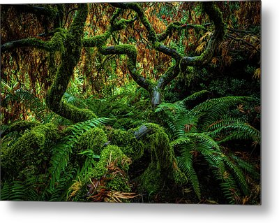 Forever Green Metal Print by Edgars Erglis