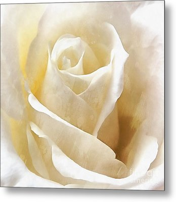 Metal Print featuring the photograph Forever More - Ivory Rose by Janine Riley