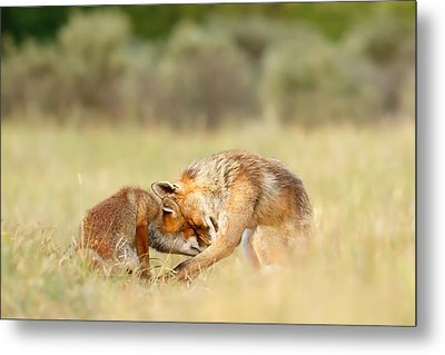 Foreverandeverandever - Red Fox Love Metal Print