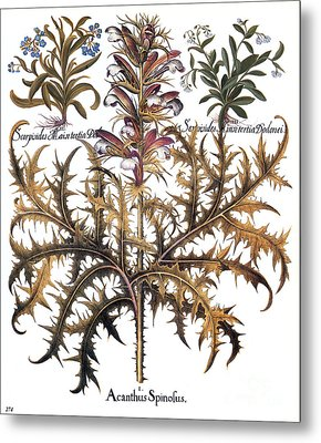 Forget-me-not & Acanthus Metal Print by Granger