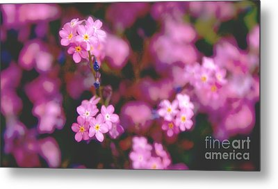 Metal Print featuring the photograph Forget Me Not by Louise Fahy