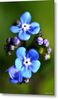 Forget-me-not Metal Print by Noah Cole