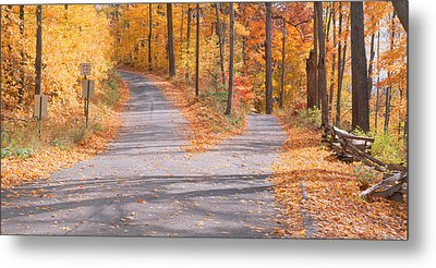 Forked Road In A Forest, Vermont, Usa Metal Print