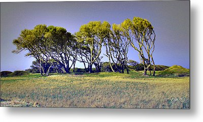 Metal Print featuring the photograph Fort Fisher Trees by Phil Mancuso
