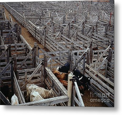 Fort Worth Stockyards Metal Print by Merton Allen