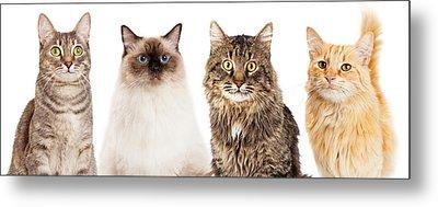 Four Happy Cats Website Banner Metal Print