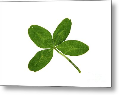 Four Leaf Clover Metal Print by Photo Researchers