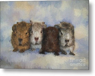 Four Little Guinea Pigs Metal Print