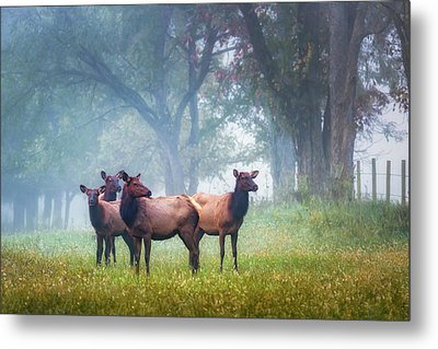 Metal Print featuring the photograph Four Of A Kind by James Barber