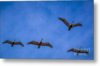 Four Pelicans Metal Print