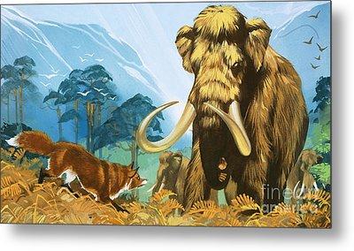Fox Attacking Mammoth Metal Print by Angus McBride