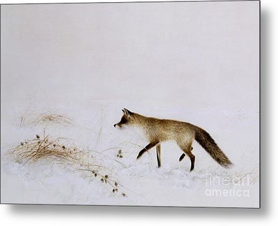 Fox In Snow Metal Print by Jane Neville