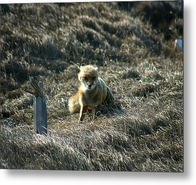 Fox In The Wind Metal Print by Anthony Jones