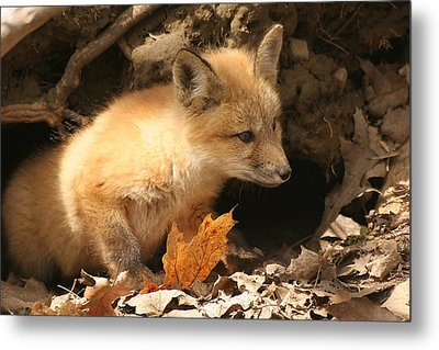 Metal Print featuring the photograph Fox Kit At Entrance To Den by Doris Potter