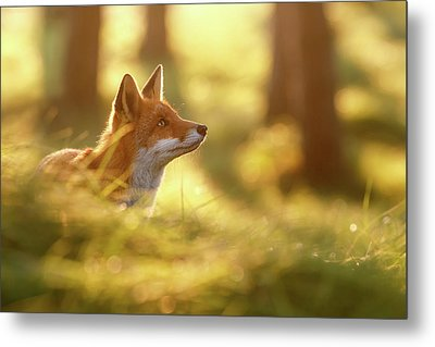Fox Of Hope Metal Print
